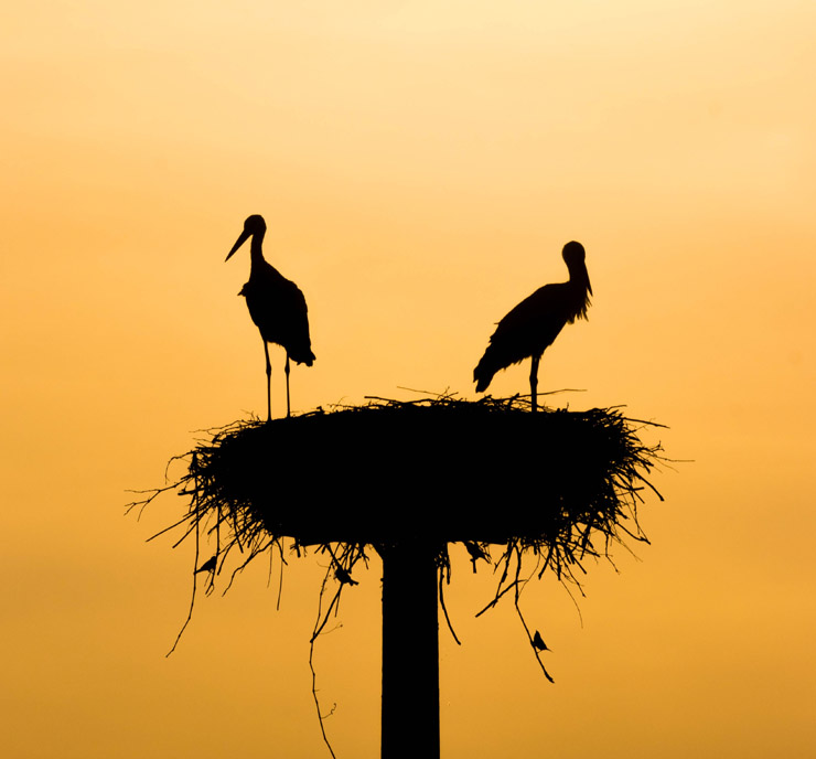 Birds In a Nest - Credit Unsplash