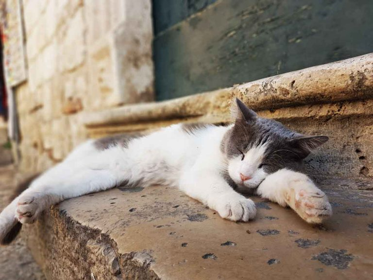 Cat sleeping on a step in the Old Town of Dubrovnik