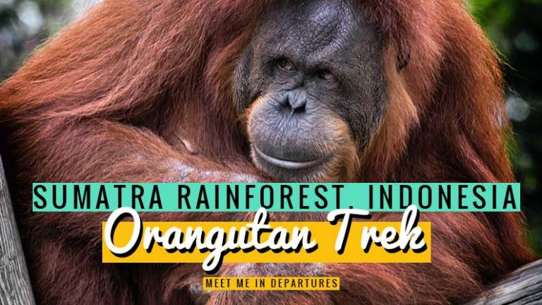 An amazing jungle expedition through the Sumatran rainforest on an Orangutan Tour near Bukit Lawang to see the stunning 'Rang-Tangs' in the wild. If you are travelling around South East Asia or Indonesia you need to add Orangutan hike to your bucket list. This is one of the top wildlife experiences ever. Just wow! #SouthEastAsia #Indonesia #Sumatra #WildlifeExperiences #Bucketlist