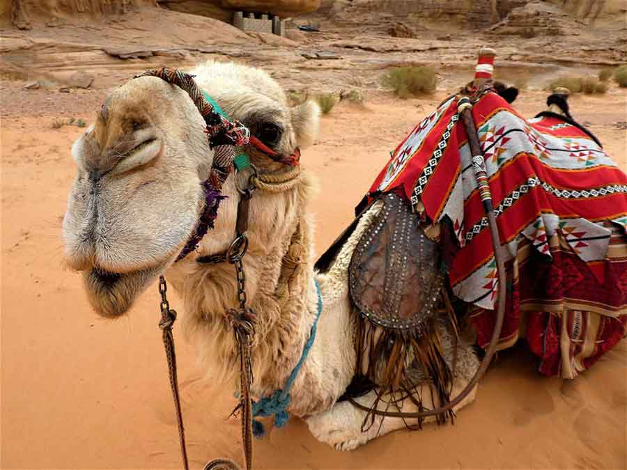Wadi Rum Camp - Experience Bedouin hospitality on an exciting stay at a Wadi Rum Desert Camp 5