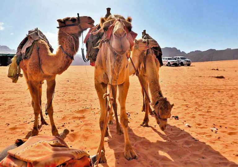 Is a night at a Wadi Rum Camp on your Jordan bucket list? It certainly will be after this. Experience true Bedouin hospitality & life at a Wadi Rum Desert camp. #WadiRum #Jordan #MiddleEast