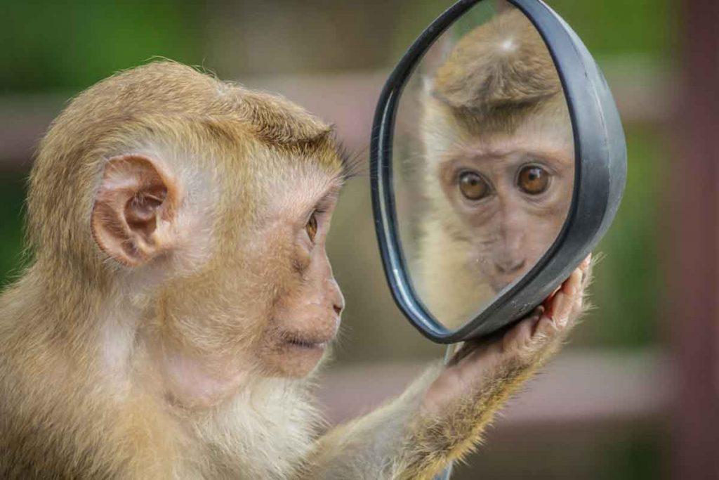 monkey-Image-by-Andre-Mouton-from-Pixabay-optimised