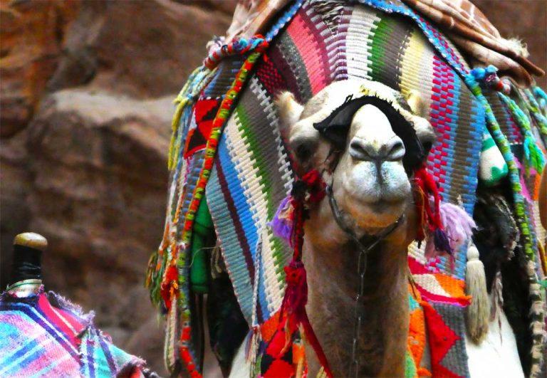 Camels-at-Petra-Optimised