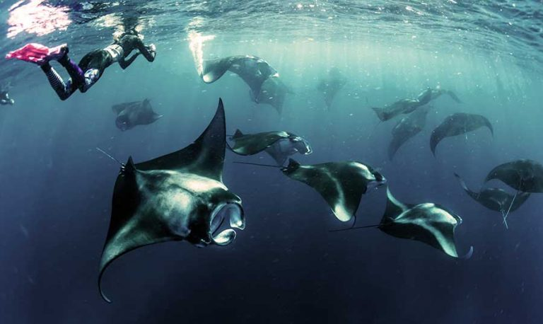 Bali bucket list manta-ray-sebastian-pena-lambarri-unsplash-optimised