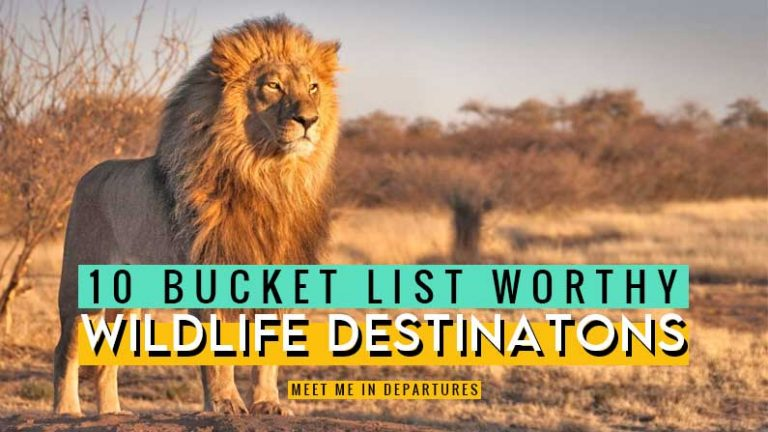 Love wildlife? Check out some of the World's best animal experiences. You won't be able to resist adding these destinations to your wildlife bucket list. 10 of the best wildlife experiences in the world, all the what's and how's. Amazing animal experiences from all over the world. How many of these wildlife destinations do you want to go to? #wildlife #nature #naturelovers
