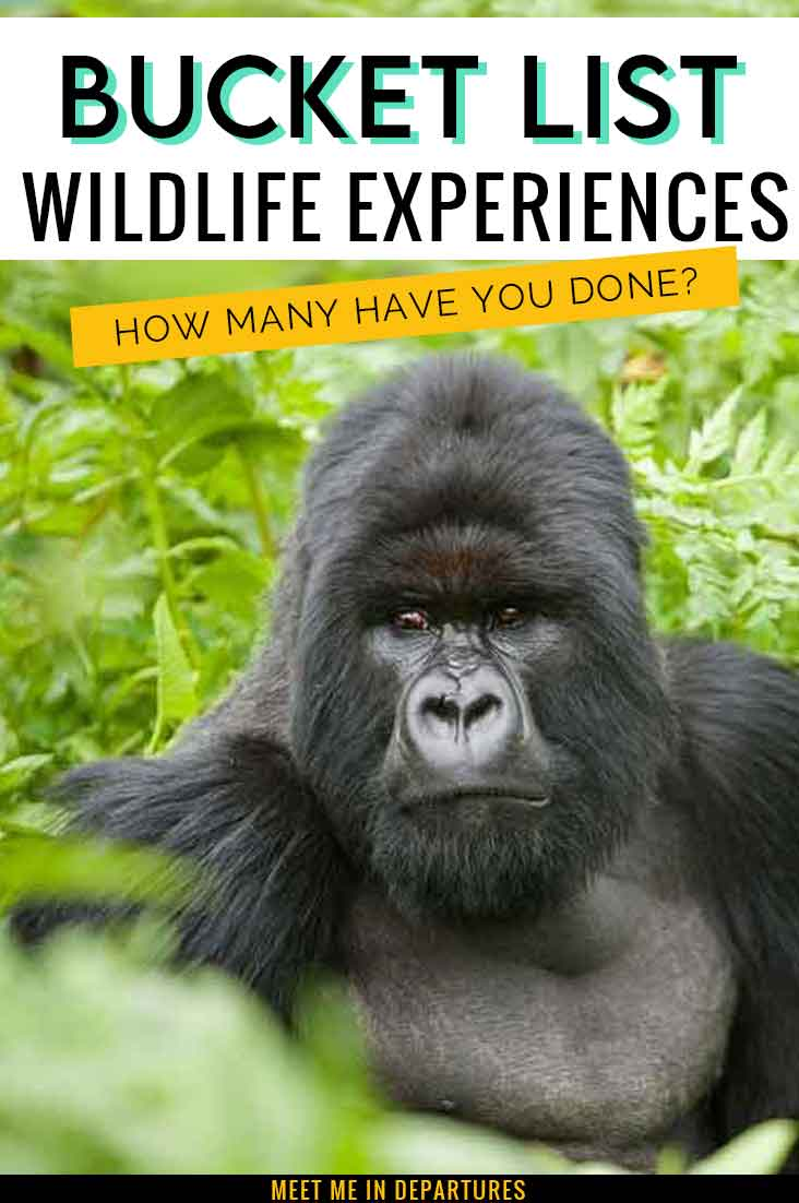 How many of these wildlife destinations have you been to? Check out this list of bucket-list-worthy animal experiences. You won't be able to resist adding these destinations to your wildlife bucket list. Wildlife Travel | Wildlife Tourism | Ethical Animal Experiences | Best Animal Experiences | Wildlife Bucket List | Worlds Best Wildlife | Animal Encounters | Galapagos | Amazon Rainforest | Big 5 Safari | Great Barrier Reef #wildlifetravel #naturetravel #wildlifetourism #naturelovers