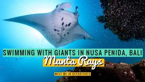 Manta Point Nusa Penida: An outstanding experience swimming with Manta Rays