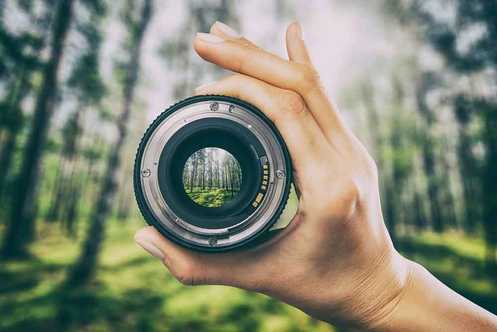 14 Of The Best Cameras for Bloggers - The Top Blogging Camera for Every Niche! 14